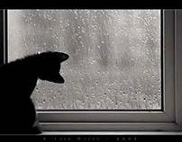 Rainy Day (Music)