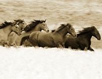 Horses Running (Music)