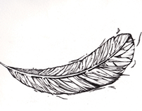 Illustration | Feather