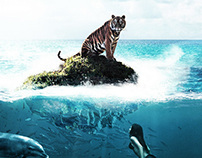 Alone Tiger On The Sea...