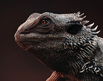 The Bearded Dragon (3D)