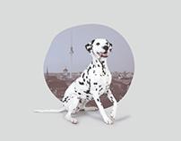 Luna & Amigo / Corporate Design