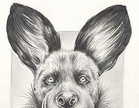 Illustrations - september 2013