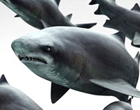 Shark 3D Model - Download at 3DSquirrel