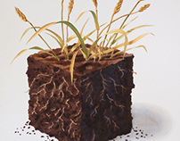 Rich Soil Nurtures Sturdy Wheat