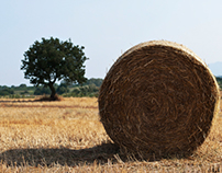 SF Haystacks (subproject of Summer Fields)