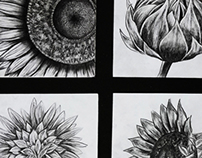 Sunflowers (Visual Identity)