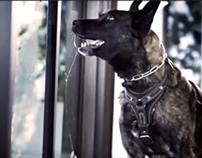 Ed Kenley Ford Cat & Dog TV Spots