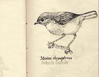 Exp. Gráfica. Libreta Ilustración Científica.