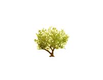 oliveiras logo