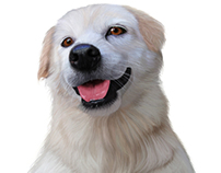 Realistic Dog