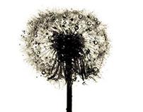 BC Ads : Dead Flower