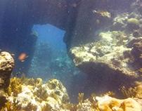 Bermuda Diving Summer 2013