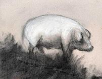 The white pig's destiny