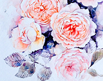 English roses in watercolor