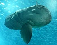 Reviver o passado na Mola