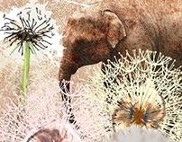 elephant blossom