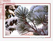 Holiday Card - Snowy Spruce