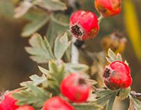 Autumn in Karabi Jaila