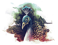 PEACOCK DANCE//ILLUSTRATION BOOK, ID