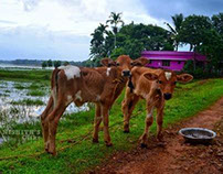 "Kerala ""Gods own country"""