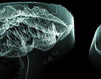 The Attack of Aurelia Aurita Moon | Jellyfish