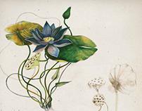 Botaniche