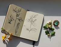Botanical sketches