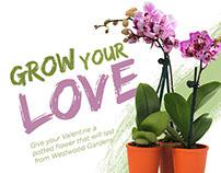 Valentine's Day Campaign | Westwood Gardens