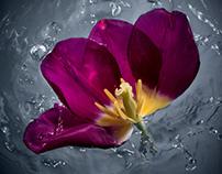FlowerPower-Splashes