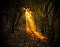 Autumn Fantasy II
