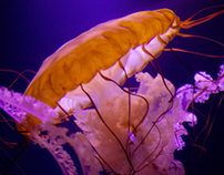 Barcelona Media Design / Atlantis, Bahamas, Jellyfish