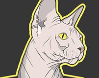Pyramid Cat