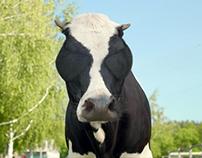 DOBRYNIA - Cows