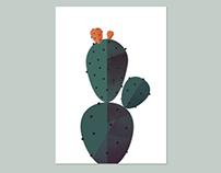 Geometry & Biology: Cactus