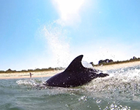 Close Encounters of the Dolphin Kind