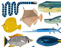 Lanyu fish island