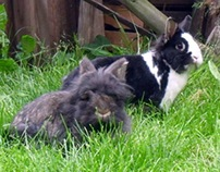 My loved rabbits