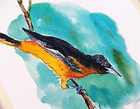 Bird series started