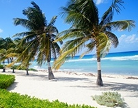 Conch Point Beach Resort | Cayman Islands
