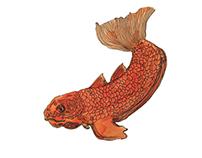 • fish •