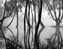 /Mist/