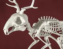 Wolpertinger Skeleton