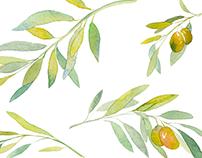 Olive Leaf | Logo