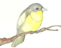 birds for my girl