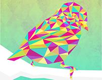 BIRD IN COLORS