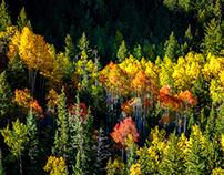 Colorado Gold -- Part 1
