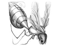 The Bio-Mechanical Alphabet