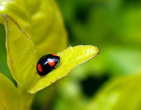Lady Bug in Calmness