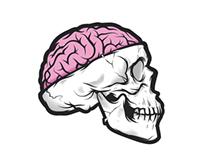 Brain Skull